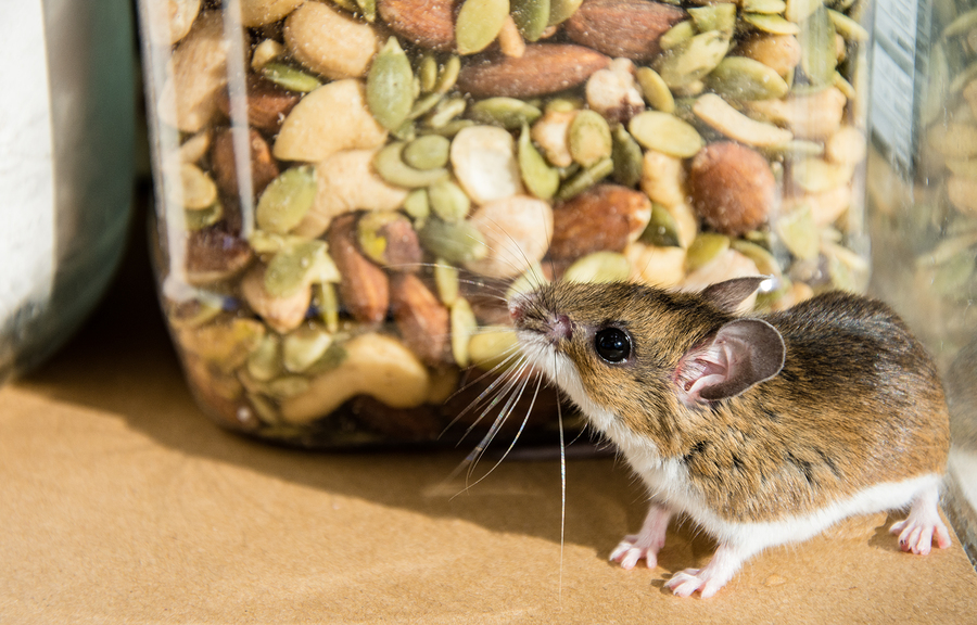 Top 5 Reasons Pests are Entering Your Home